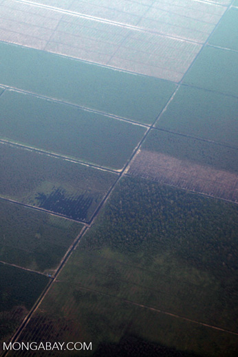 Plantations as seen from an airplane in South Kalimantan [kalsel_0249]
