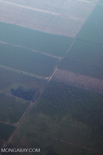 Plantations as seen from an airplane in South Kalimantan [kalsel_0251]