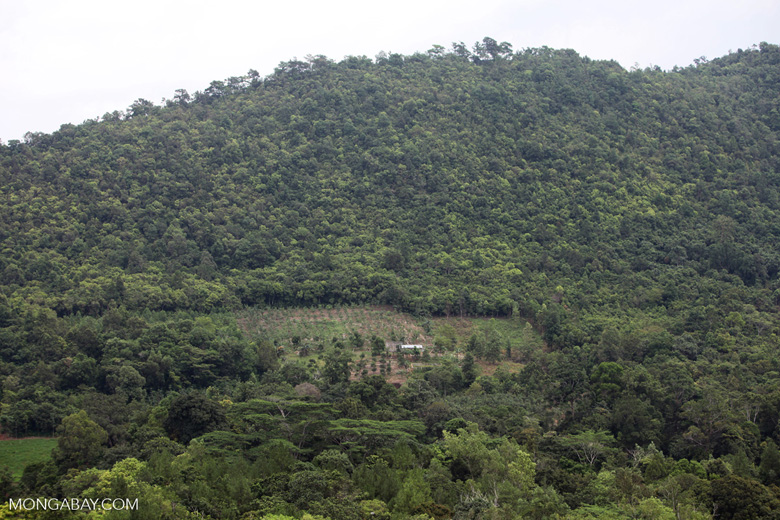 Conversion of forest to plantations in South Kalimantan