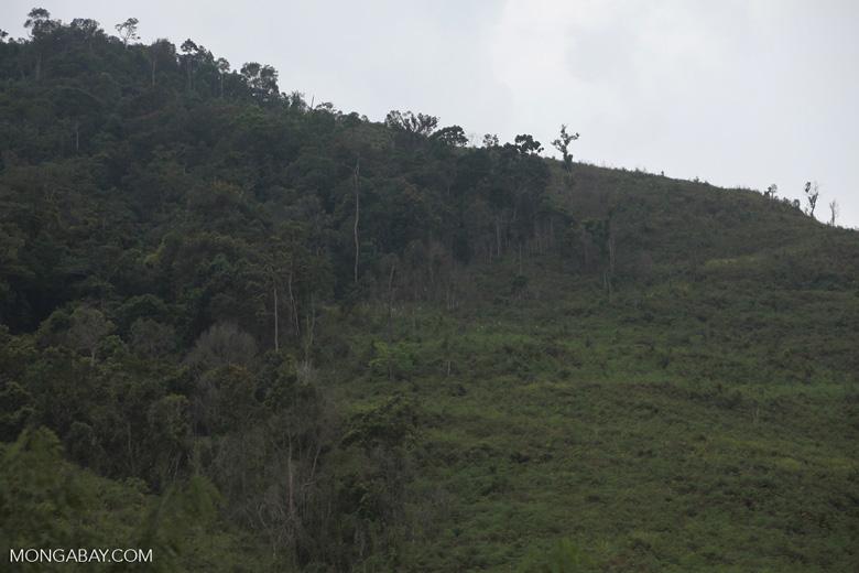 Deforestation in Taman Hutan Raya National Park [kalsel_0268]