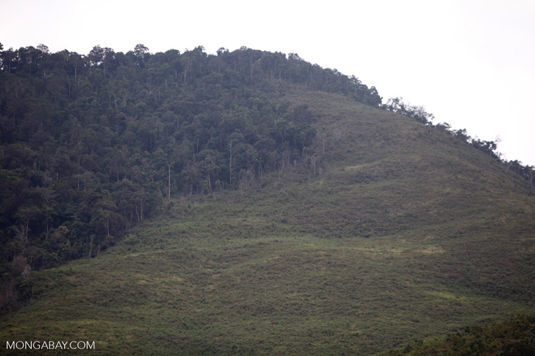 Deforestation in Taman Hutan Raya National Park [kalsel_0272]