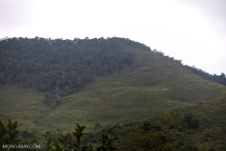 Deforestation in Taman Hutan Raya National Park