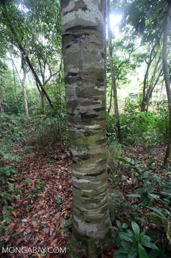 Tree with interesting bark pattern [kalsel_0302]