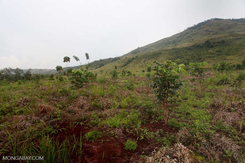 One Man One Tree reforestation project using Gmelia and Mahoni species [kalsel_0306]