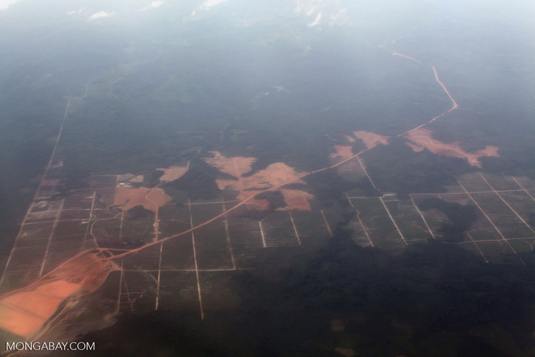 Forest clearing for oil palm in Indonesian Borneo