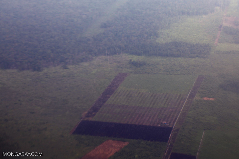 Oil palm plantation in Central Kalimantan [kalten_0063]