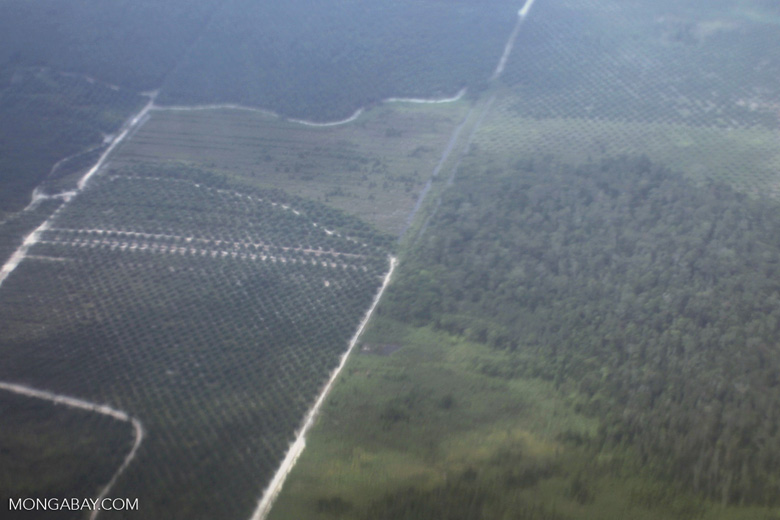 Oil palm plantation in Central Kalimantan