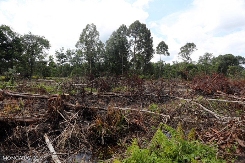 Slash-and-burn agriculture in Borneo [kalteng_0140]