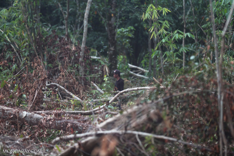 Farmer clearing peat forest in Indonesian Borneo [kalteng_0151]