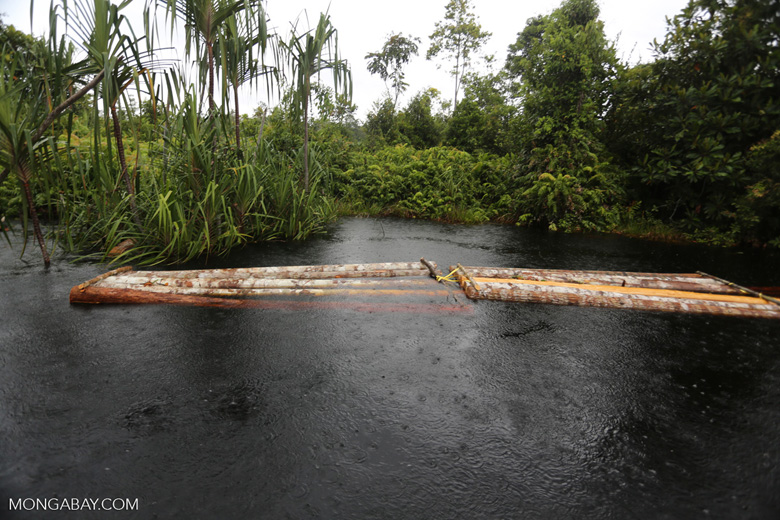 Illegally logs being floated in a canal in Borneo