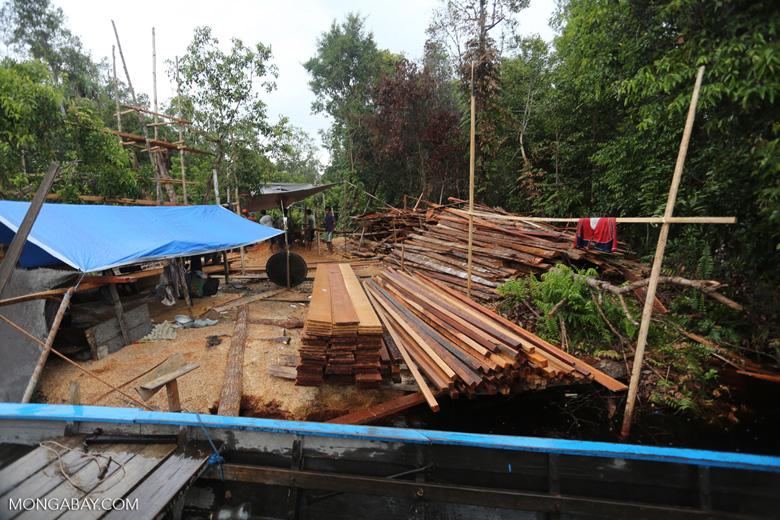 Illegal sawmill in Borneo