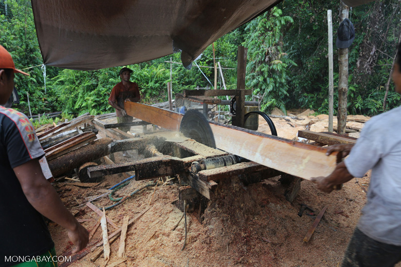 Illegal logging operation in Borneo [kalteng_0219]