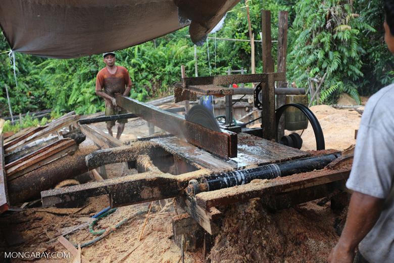 Illegal logging operation in Borneo [kalteng_0228]
