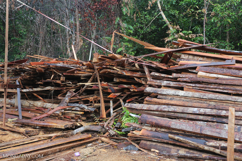 Stacks of illegally logged timber in Borneo [kalteng_0250]
