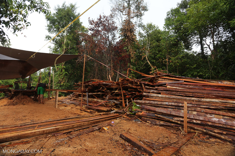 Stacks of illegally logged timber in Borneo [kalteng_0258]