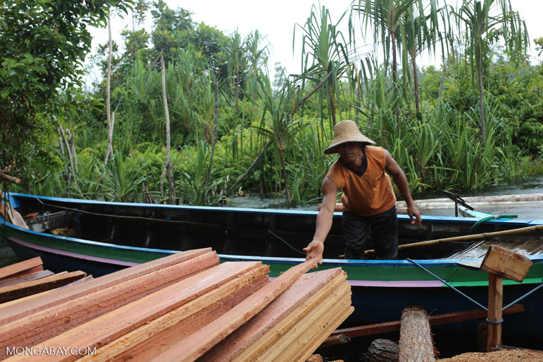 Illegal logging in Borneo [kalteng_0275]