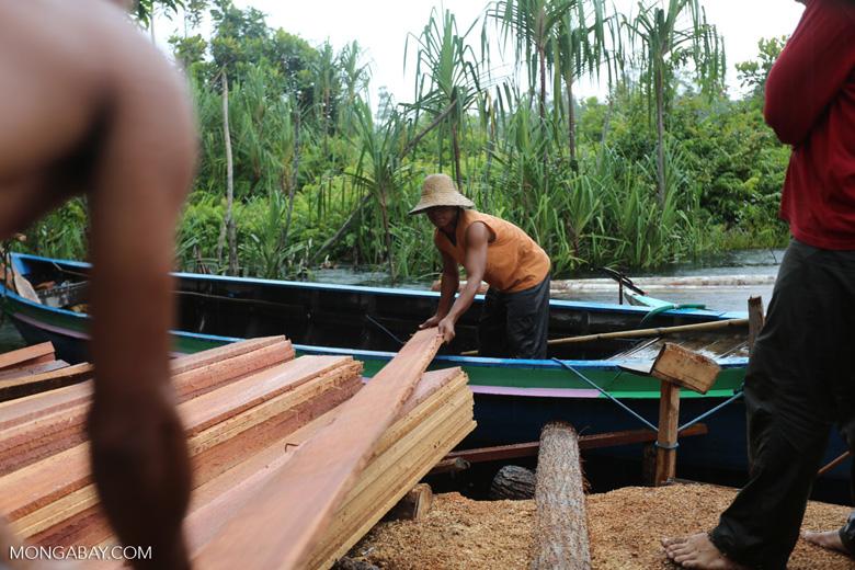 Illegal logging in Borneo [kalteng_0276]