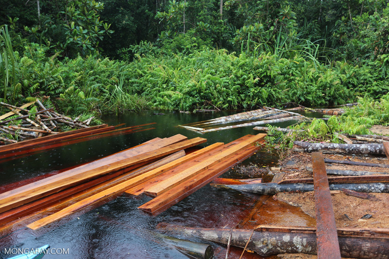 Illegal logging in Borneo [kalteng_0287]