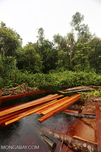 Illegal logging operation in Borneo