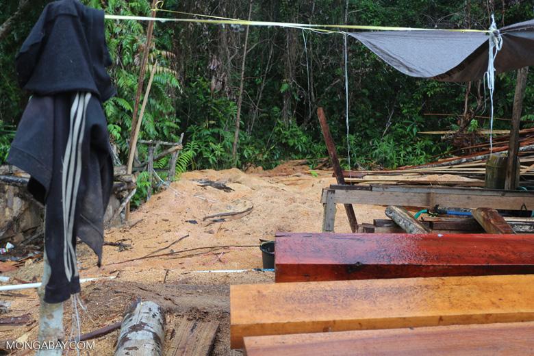 Illegal logging in Borneo [kalteng_0295]