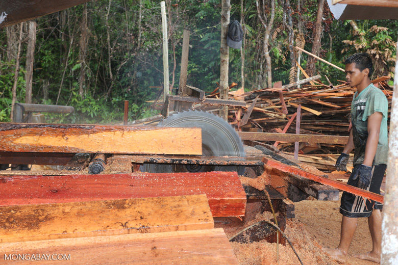 Illegal logging in Borneo [kalteng_0300]