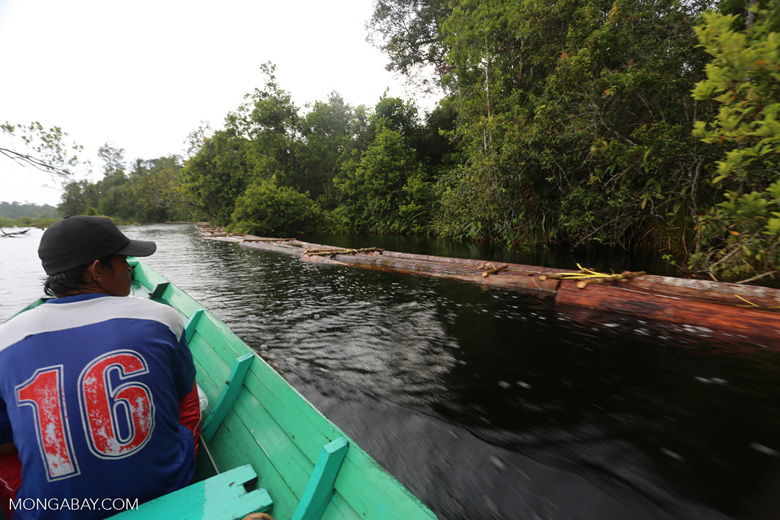 Illegal logs floating in a river, waiting for processing [kalteng_0308]