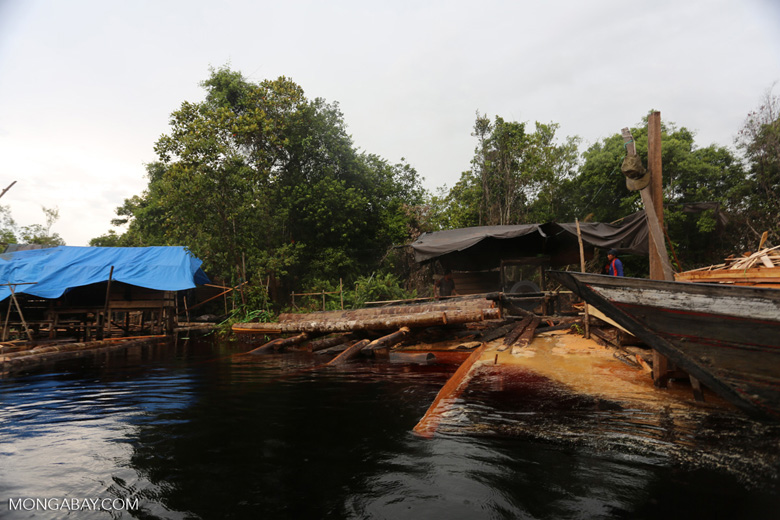 Illegal logging in Borneo [kalteng_0318]