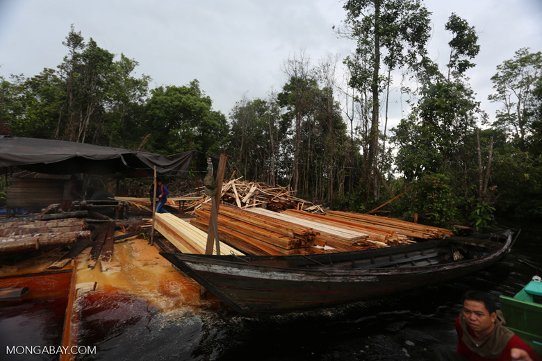 Illegal logging in Borneo [kalteng_0324]