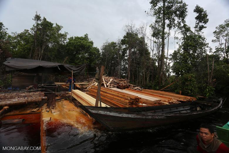 Illegal logging in Borneo [kalteng_0325]