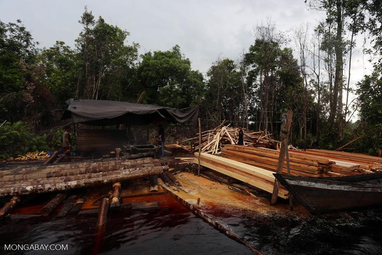 Illegal logging in Borneo [kalteng_0328]