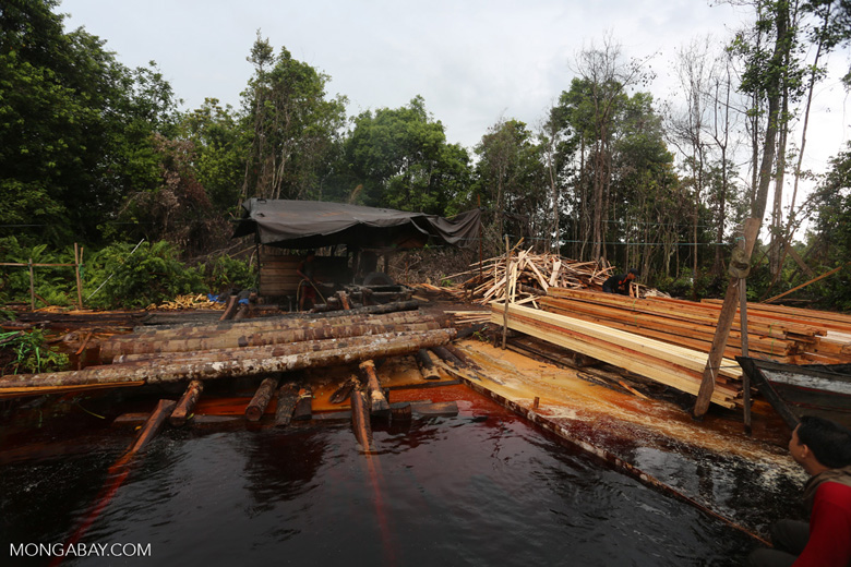 Illegal logging station in Borneo