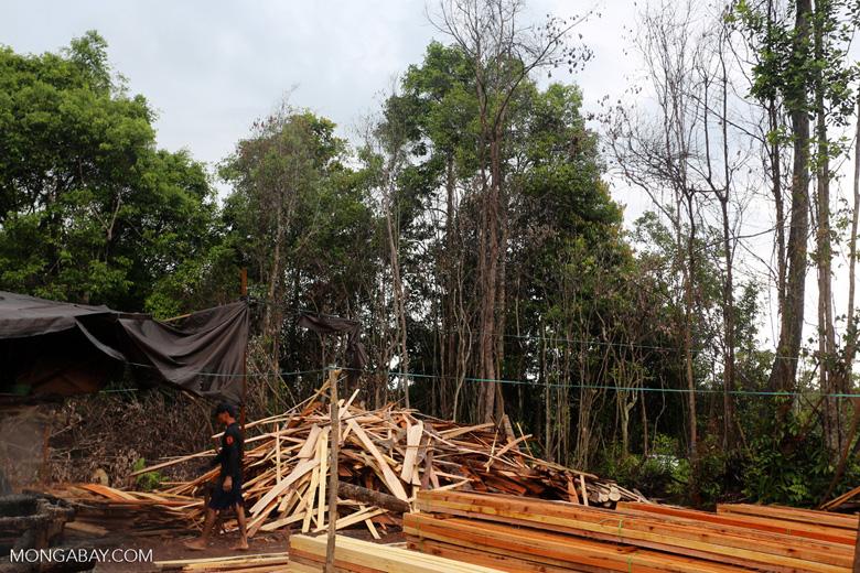 Illegal logging in Borneo [kalteng_0334]