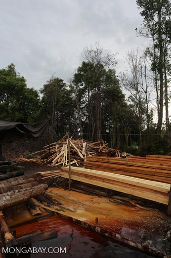 Illegal logging in Borneo [kalteng_0338]