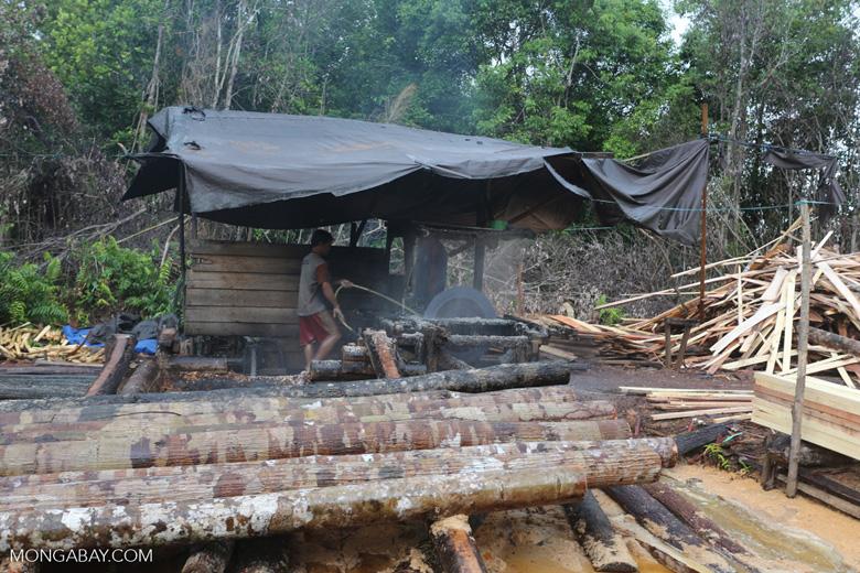 Illegal logging in Borneo [kalteng_0340]