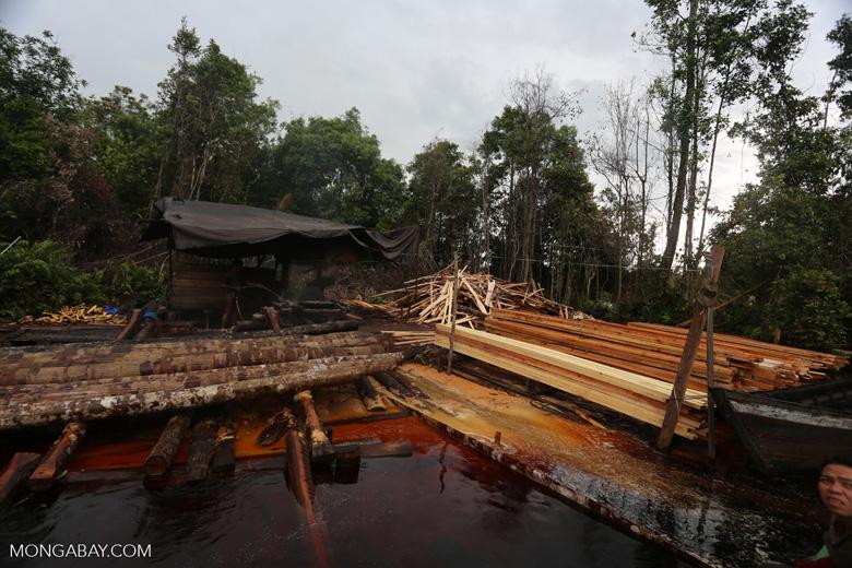 Illegal logging in Borneo [kalteng_0343]
