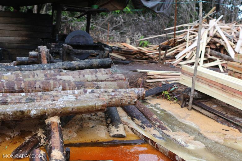 Illegal logging in Borneo [kalteng_0351]