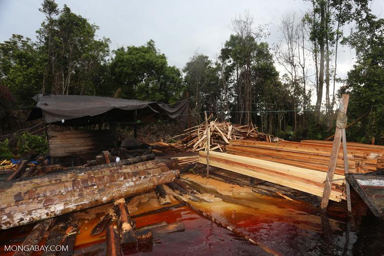 Illegal logging in Borneo [kalteng_0355]