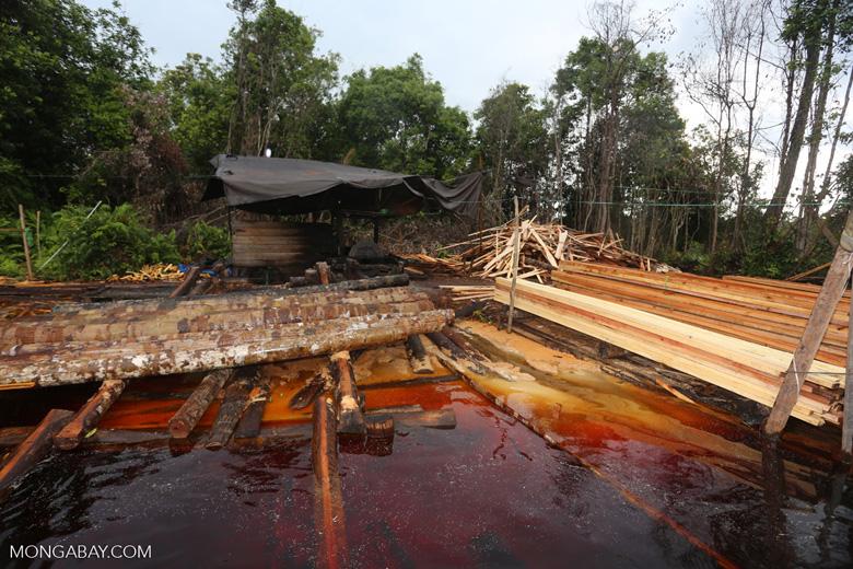 Illegal logging in Borneo [kalteng_0356]