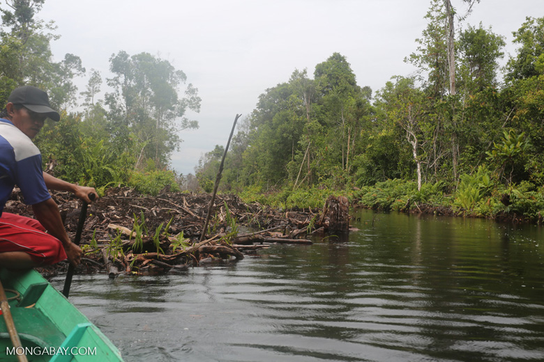 Canal built by the government of Central Kalimantan in 2012 to drain the peat forest [kalteng_0448]