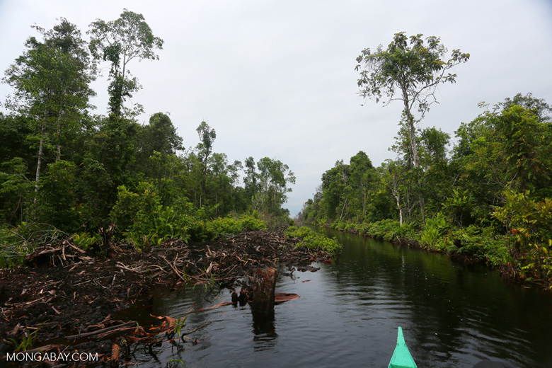 Canal built by the government of Central Kalimantan in 2012 to drain the peat forest