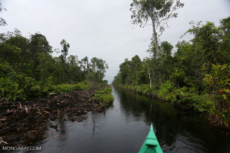 Canal draining the peat forest [kalteng_0455]