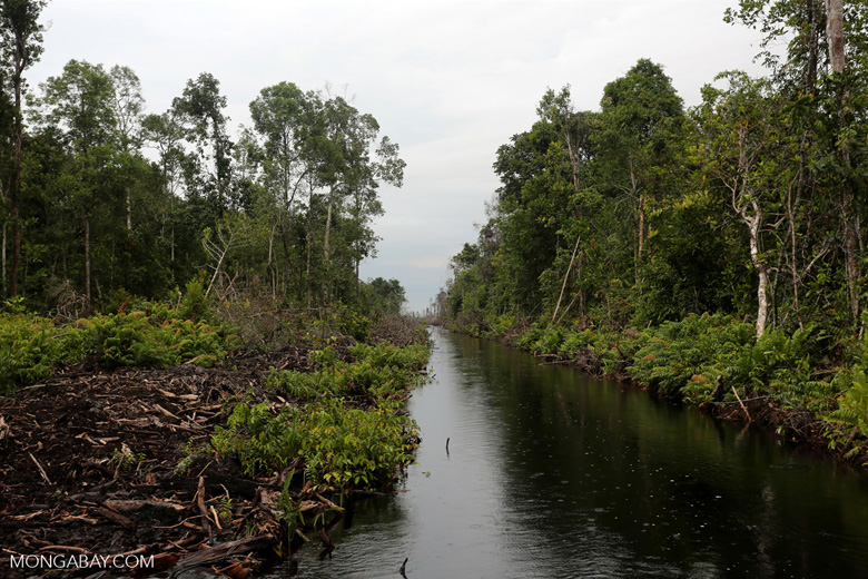 Canal in the Borneo peat forest [kalteng_0457]