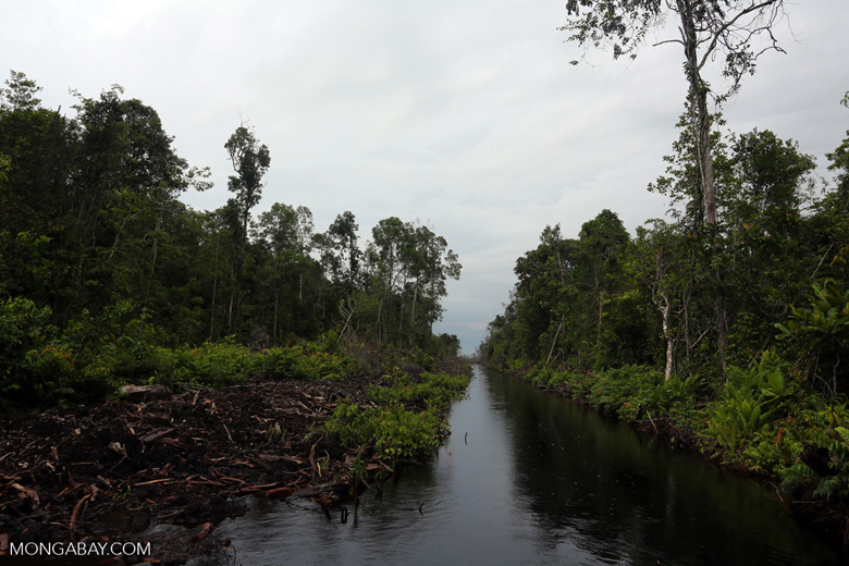 Canal draining the peat forest [kalteng_0459]