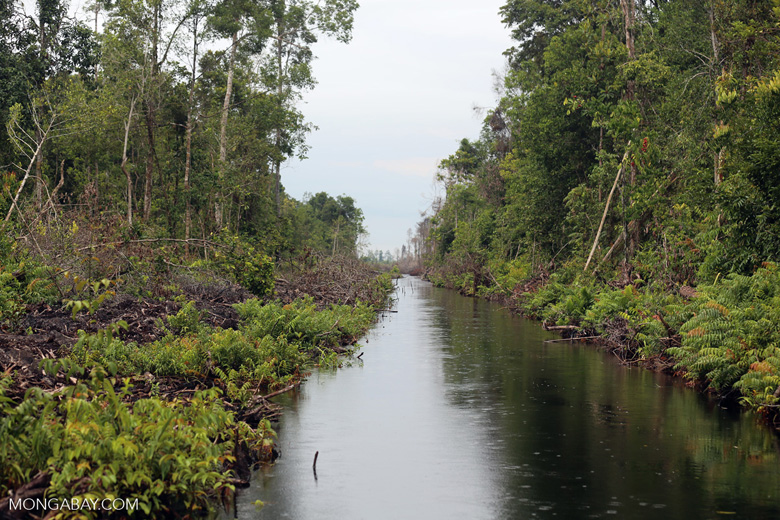 Canal in the Borneo peatland [kalteng_0462]