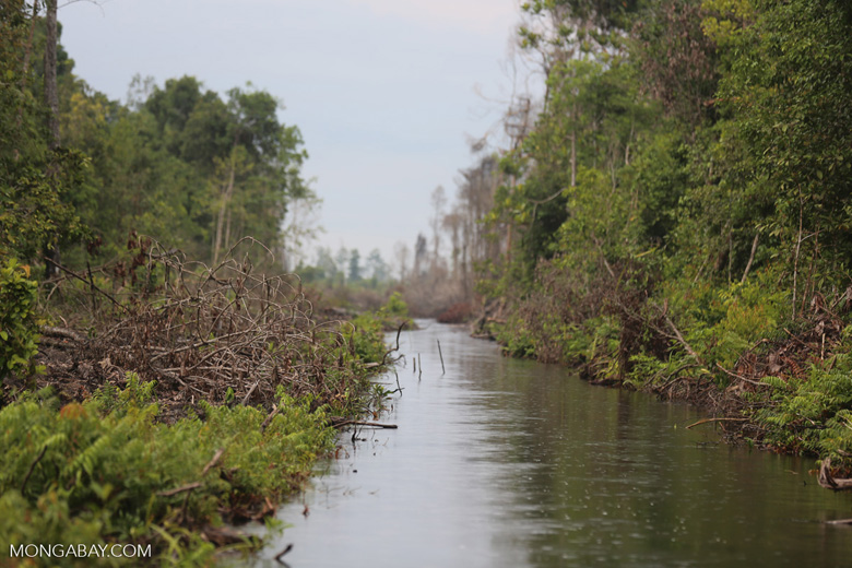 Canal built by the government of Central Kalimantan in 2012 to drain the peat forest [kalteng_0466]