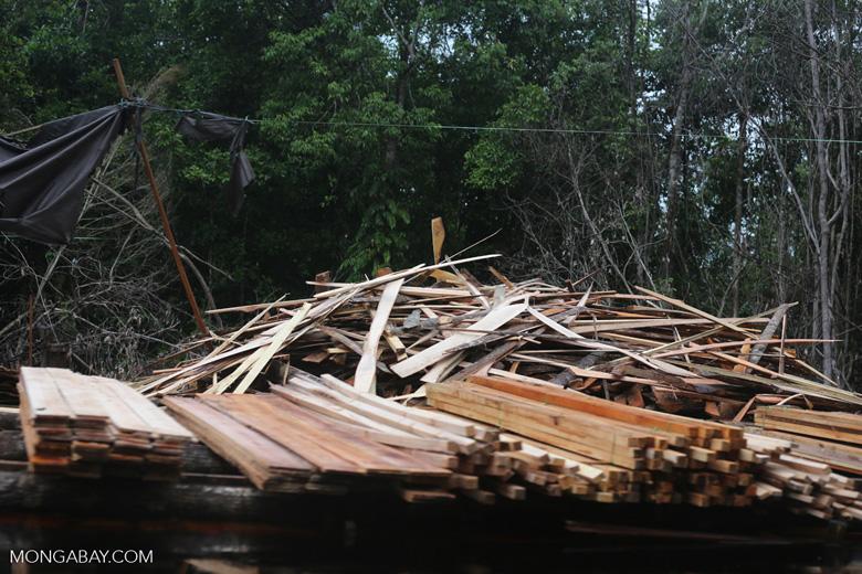 Degraded peatland in Borneo [kalteng_0483]
