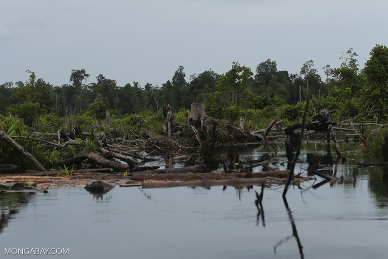 Degraded peatland in Borneo [kalteng_0484]