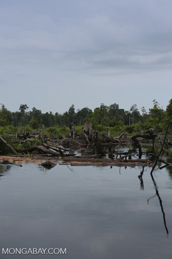 Degraded peatland in Borneo [kalteng_0486]