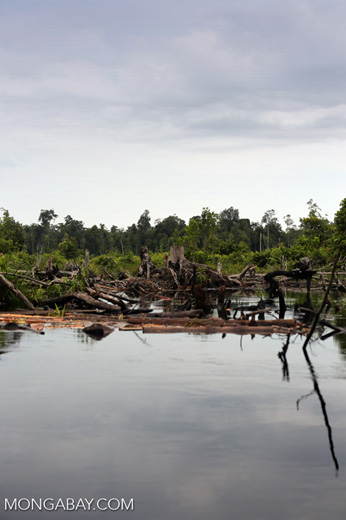 Degraded peatland in Borneo