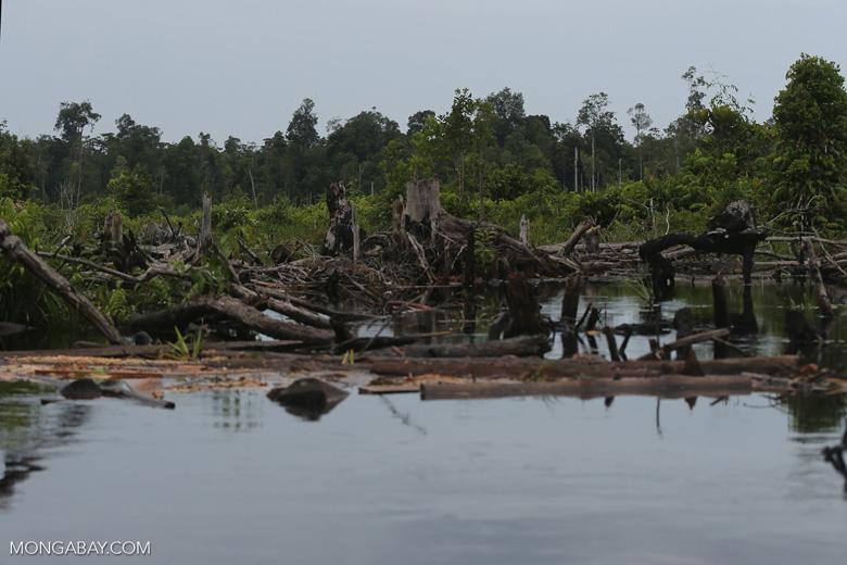 Degraded peatland in Borneo [kalteng_0488]